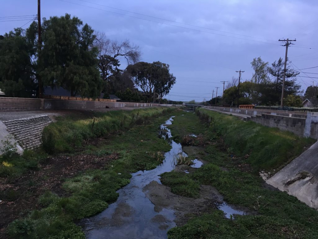 a weed-choked concrete creek channel with some water flowing through it in a winding path