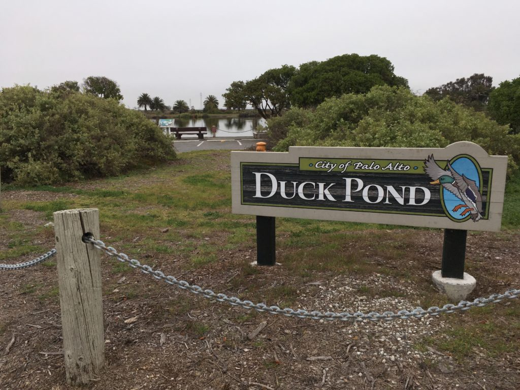 "a sign saying ""duck pond"" with the pond in the distance"