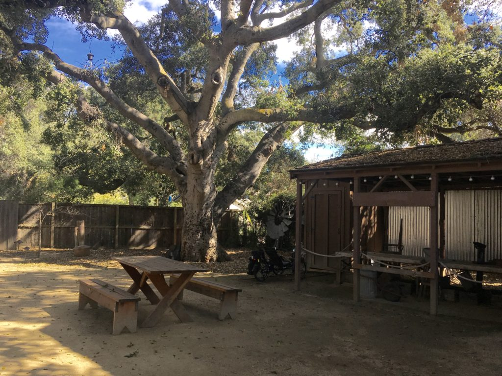 a picnic table, an old apricot sorting table, some other antique items, under a spreading coast live oak