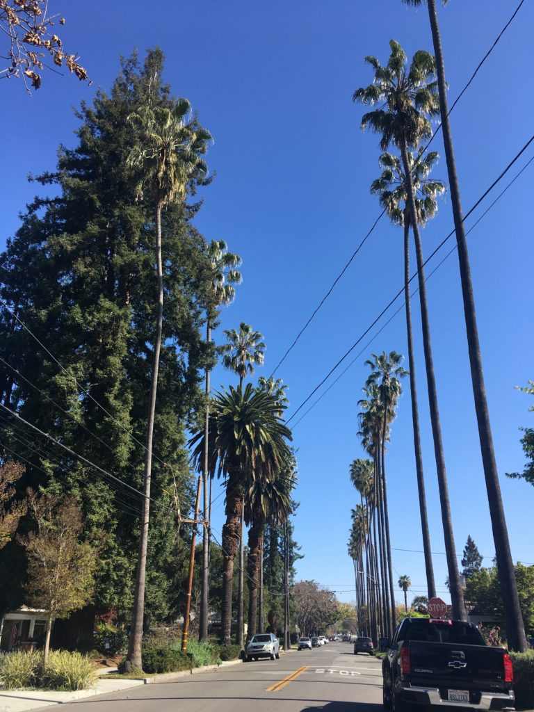 a street lined with palm and redwood trees