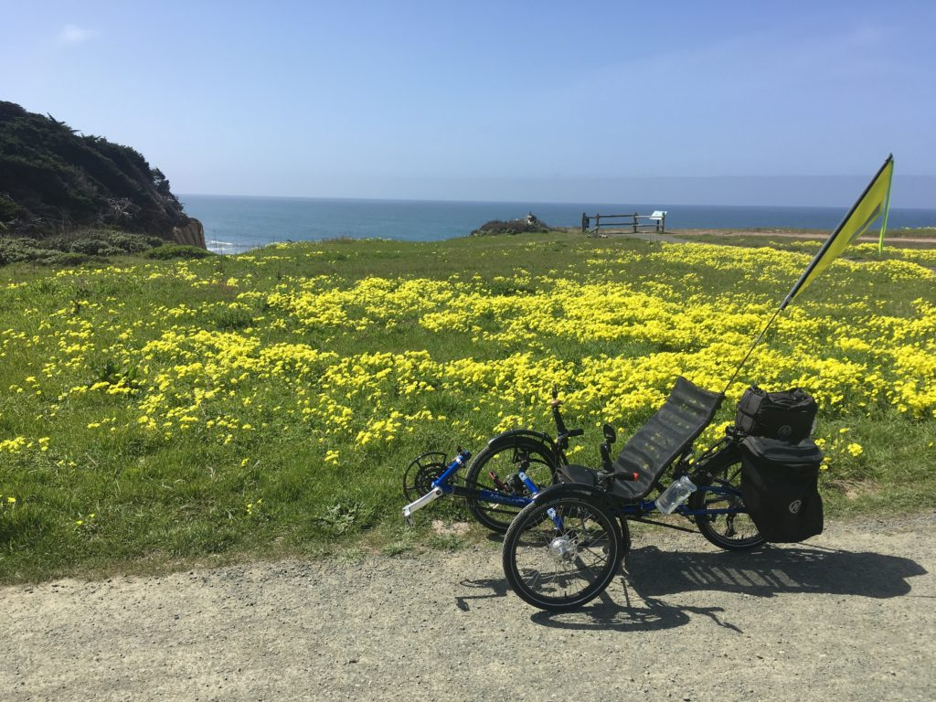 a recumbent trike in front of a field of oxalis along a bike trail