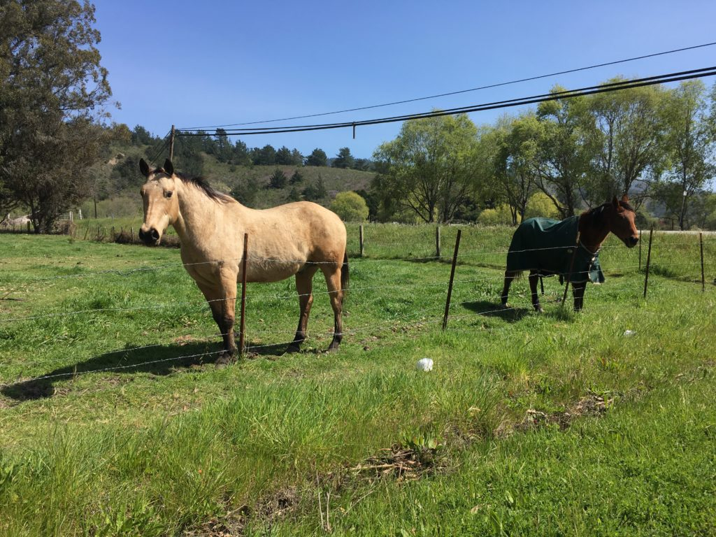 Two horses in a paddock.
